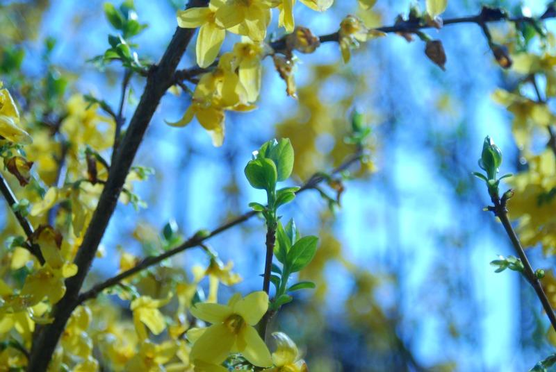 esporsi raggi del sole felicità vitamina d