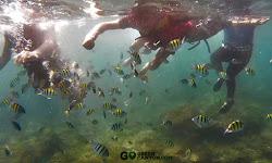 aktivitas snorkeling underwater pangandaran
