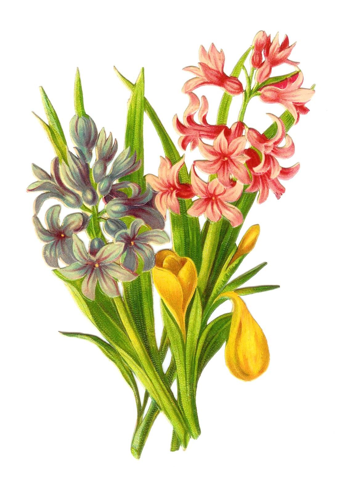 Antique Flower Clip Art Vintage Victorian Die Cut of Tulips and Hyac