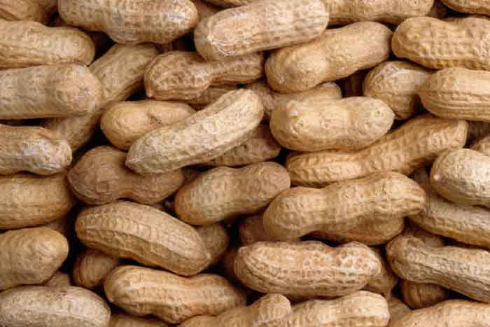 peanus essay All peanut essays are due to the lee county extension office by monday, november 7  they will be judged and the winner f rom lee county will be sent to the state competition the alabama cooperative extension system (alabama a& m university and auburn university) is an.