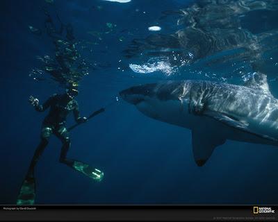 Gambar Foto Ikan Hiu Terbesar Di Dunia! ~ MiZzu.net