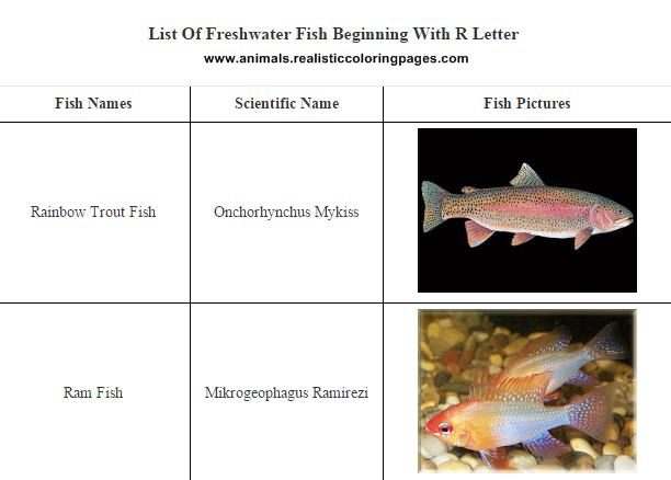 Freshwater Fish List Starting With R | Animals Name A To Z