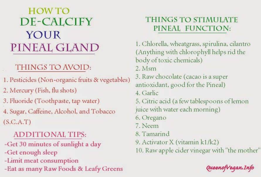 Queen Of Vegan The Pineal Gland Diet How To Decalcify Your Pineal