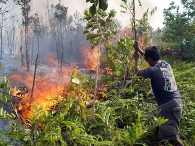 external image kebakaran+hutan+1.jpg