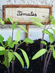 Tabuleta tomates