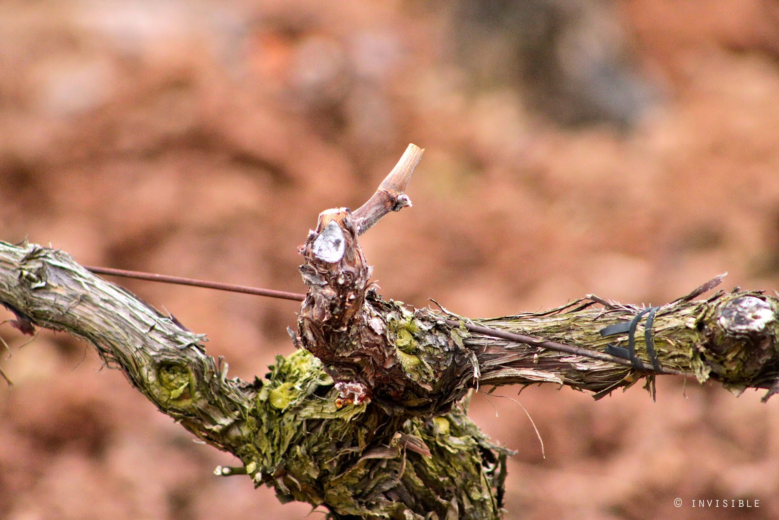 Invisible SLG Photos: El color de las viñas en Invierno