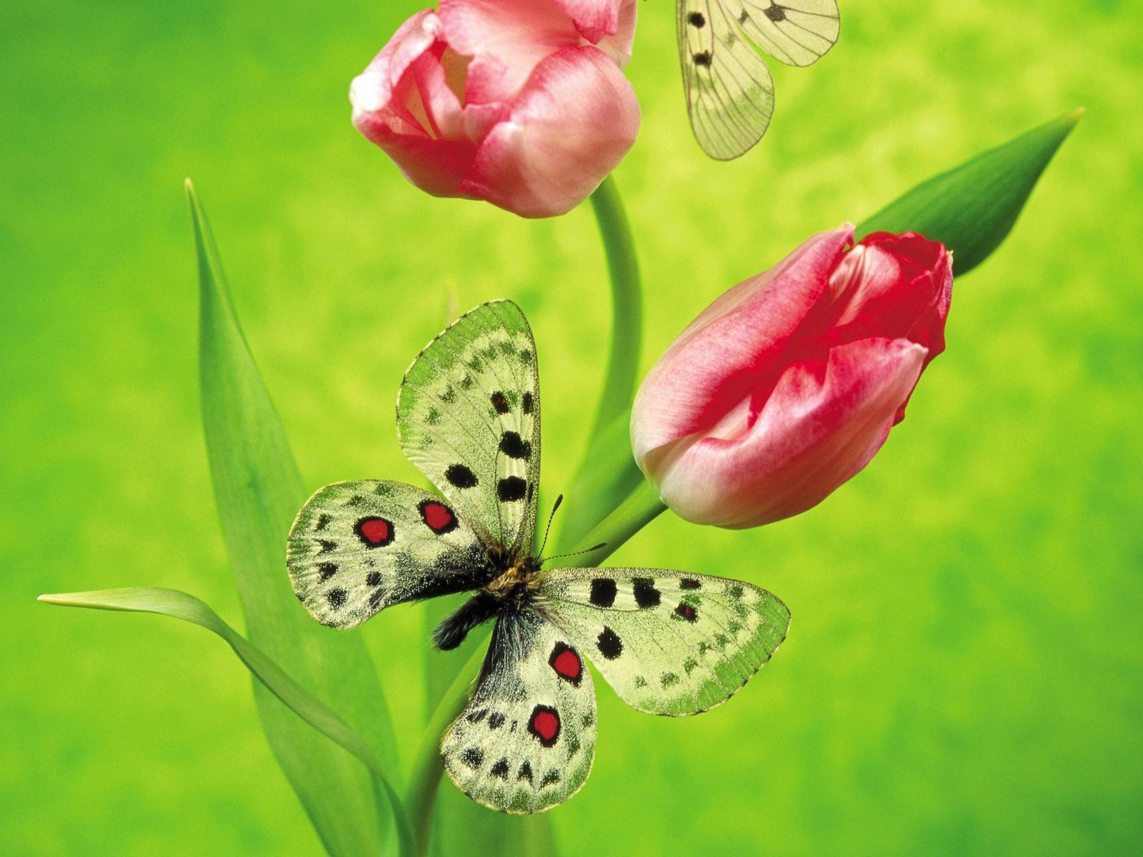 http://2.bp.blogspot.com/-cb0C4w7pjk4/TahdS0-a4zI/AAAAAAAAAWA/4s-1kkBcJHY/s1600/spring+wallpapers_%255Bwww.thewallpaperdb.blogspot.com+%255D_+%252861%2529.jpg