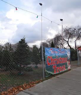 Christmas Tree Lot in Paso Robles, © B. Radisavljevic