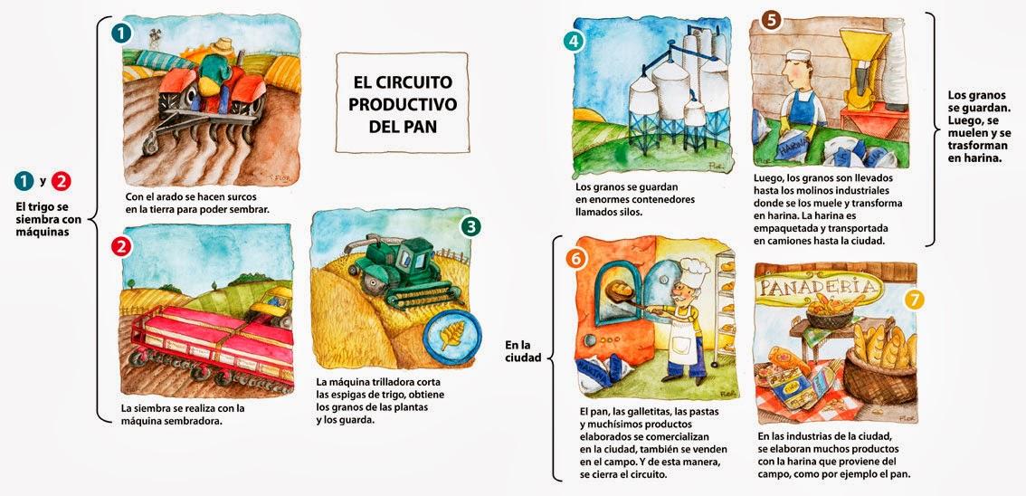 Schemi Elettrici Automobili Gratis : Circuito productivo del trigo para niños de primaria