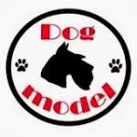 DOG MODEL - Salon pielęgnacji psów