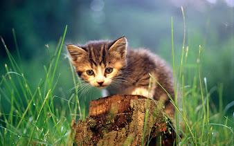 #4 Cute Animal Wallpaper