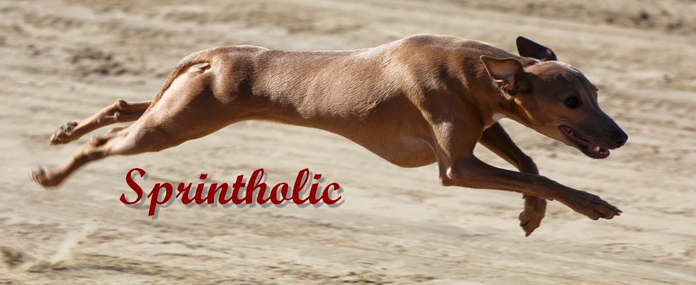 Sprintholic