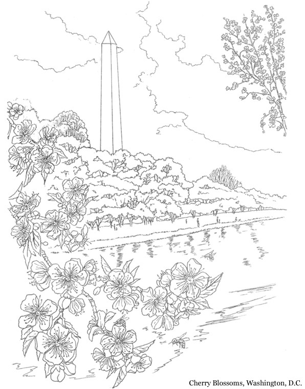 Inkspired musings cherry blossoms for spring for Cherry blossom coloring pages