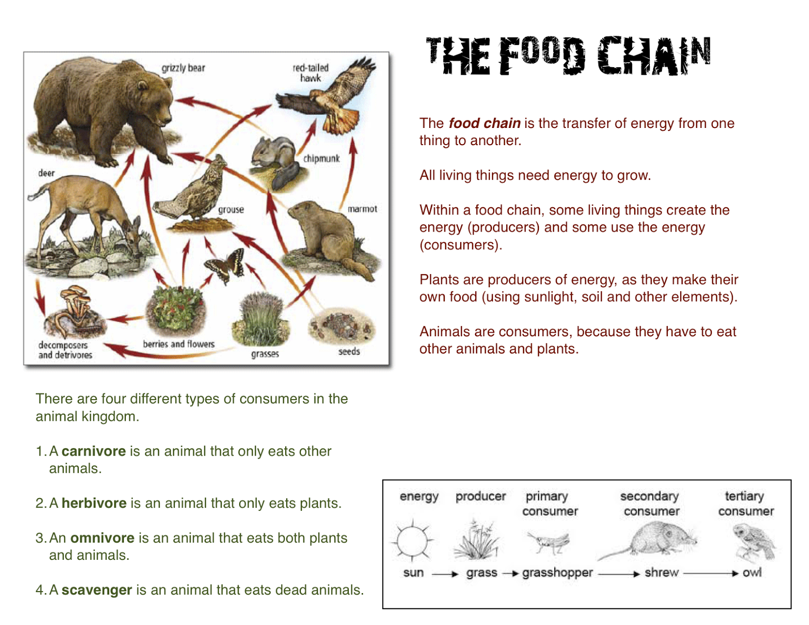 Food chain worksheets moreover 4th grade printable worksheets on food