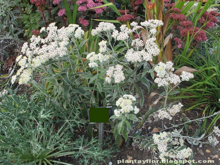 Plantas ornamentales tipos for Clases de plantas ornamentales