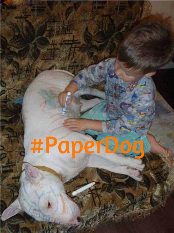 niño pintando a su perro con hashtag