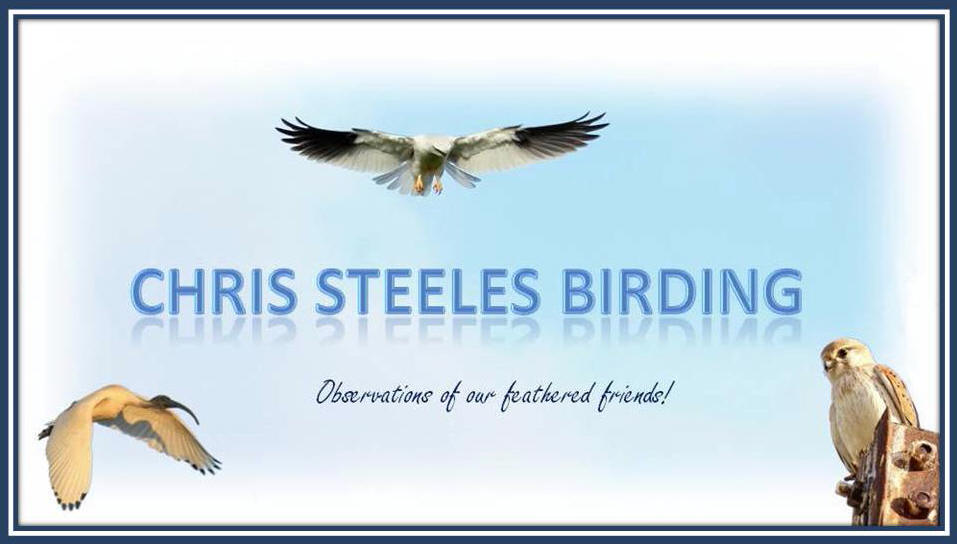 Chris Steeles Birding