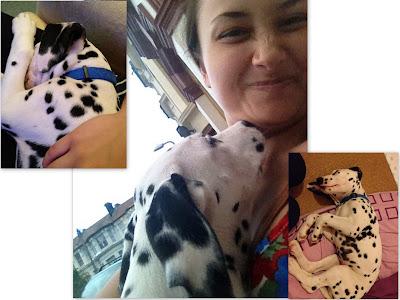dalmatian, puppy, 101 dalmatians