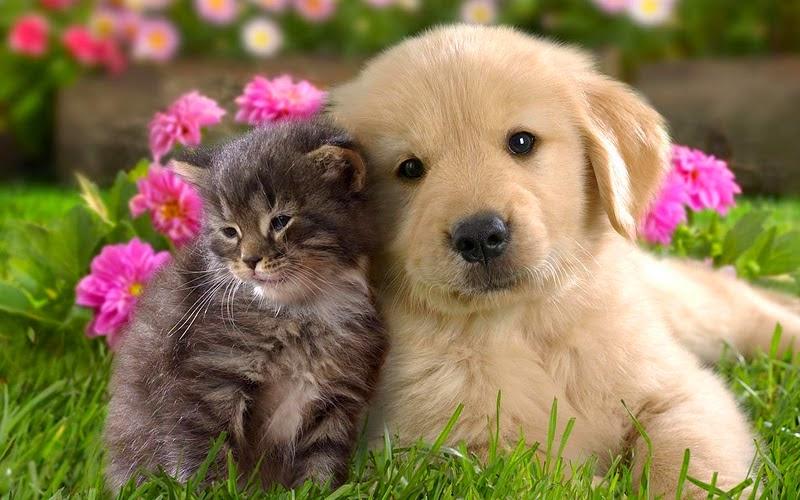 Perros y Gatos cariñosos