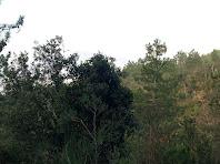 Bosc de roures, alzines i pins