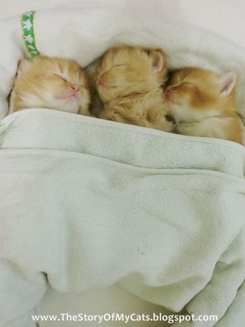 anak kucing tidur di kasur