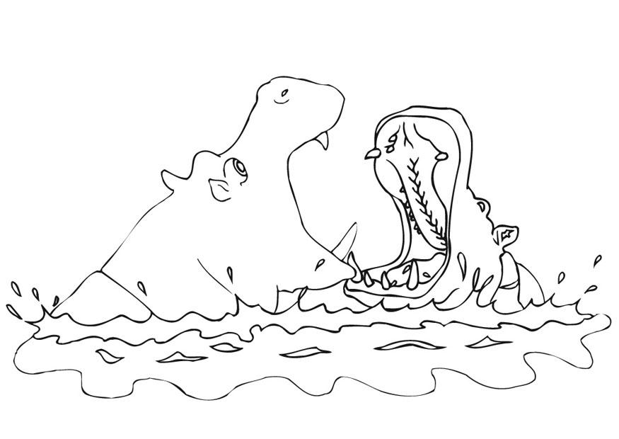 imagens para colorir de hipopotamo - Vamos Colorir o Hipopótamo? Ojogos br