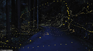 Tsuneaki Hiramatsu, time lapse photo of fireflies