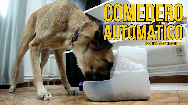 Cómo hacer un comedero automático para perros, comedero casero, comedero para perros, manualidades para perros , experimentos caseros, experimento casero, experimentos para niños, experimentos de química, experimentos de física, experimentos sencillos, experimentos fáciles, ciencia, ciencia en casa