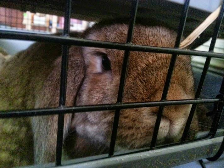 Barny Bear's Little Adventures - the rabbit adventure