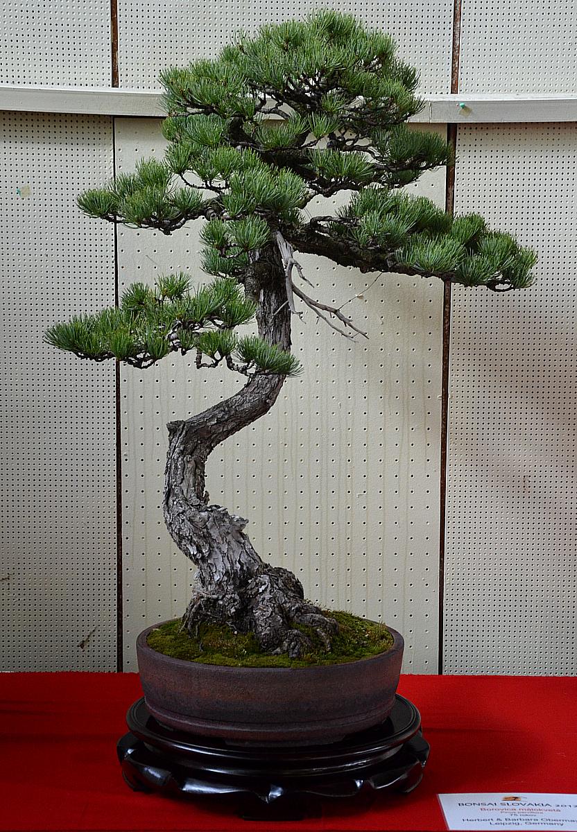 Bonsai Living Art April 2012