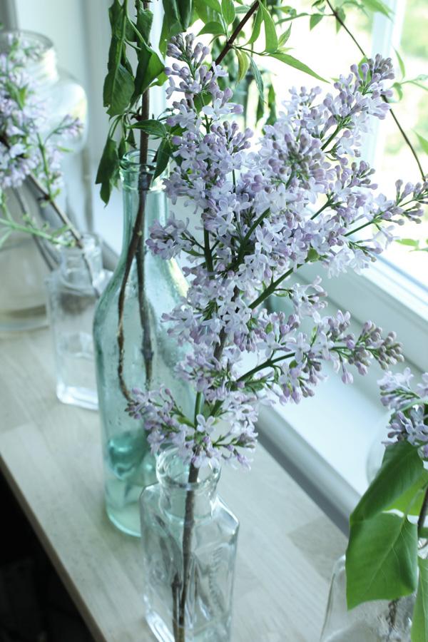 lila syrener i flaskor, syrener från trädgården