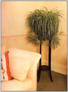 Для того чтобы иметь эффектный экземпляр, нет необходимости покупать дорогие или экзотические растения