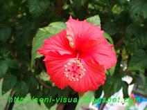 Bunga Kebangsaan Negara Bunga Raya...