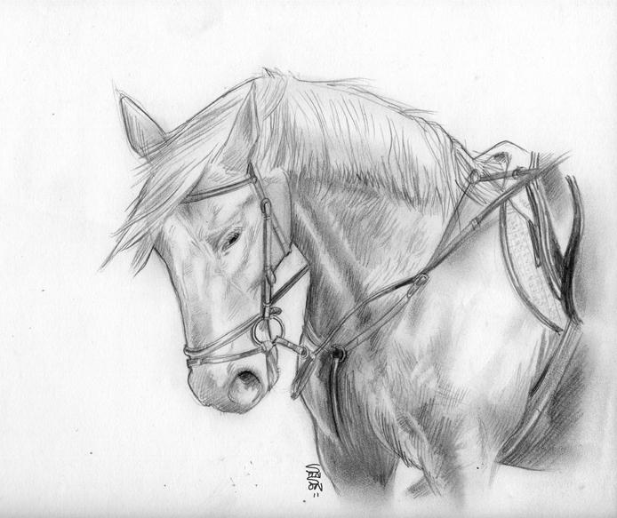 Croquis d 39 un cheval horse sketch darkeonline - Dessin un cheval ...