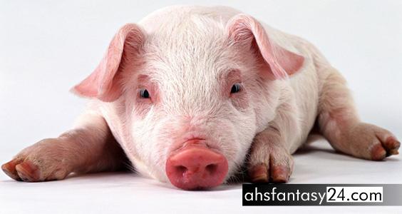 Kek Lapis Sarawak Mengandungi DNA Babi