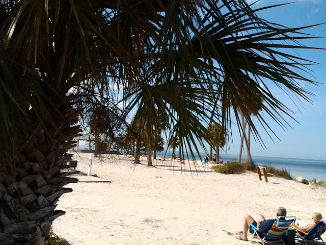 Sandy Beach with Palm Tree Image for Download. (Florida)
