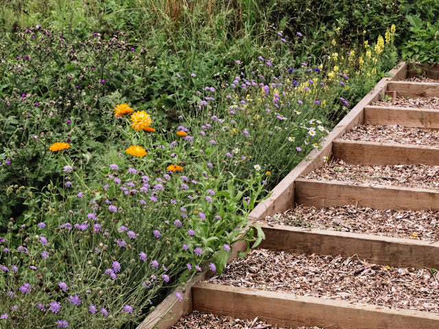 Wild flowers including marigold, scabious, and toadflax besides steps