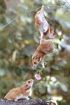 Teamwork; Photo by http://media.photobucket.com/user/quocdat1406/media/teamwork-mice.jpg