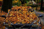 Protege la pintura de tu coche en otoño