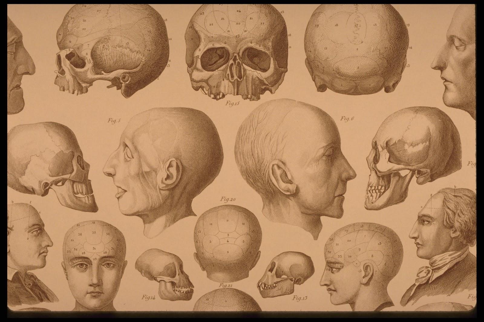 The Graffical Muse: Creepy Vintage Anatomy Prints
