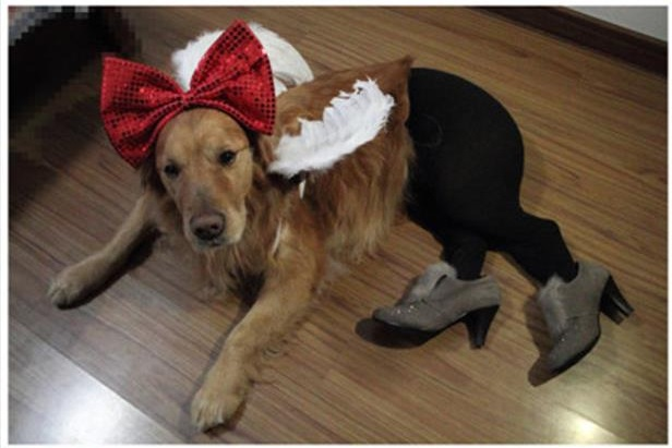 dog in tights