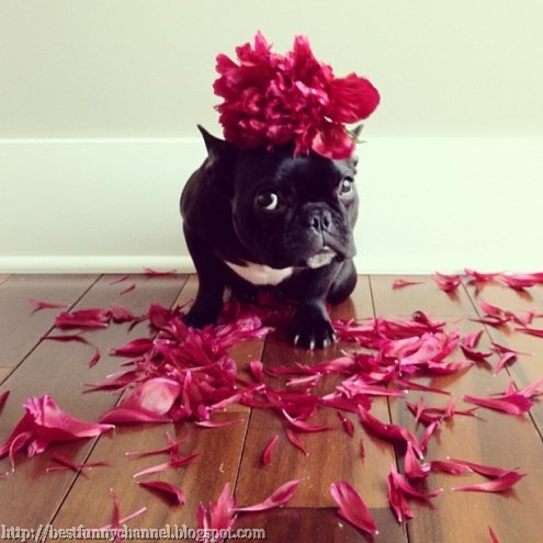 Funny dog and flowers