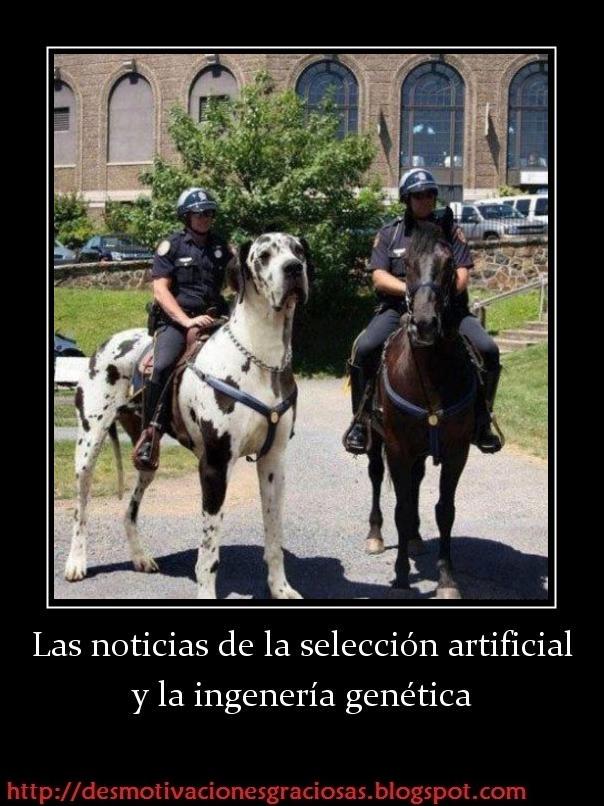 Frases CHISTOSAS e INGENIOSAS - Buscalogratis.es