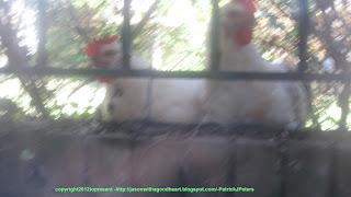 http://jasonwithagoodheart.blogspot.com/