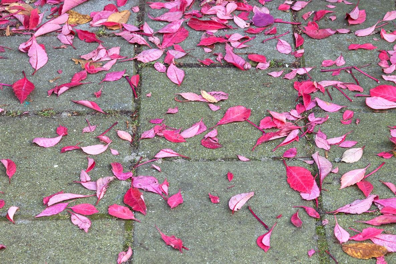 red leaves on the sidewalk