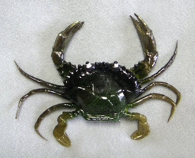 plastic mud crab