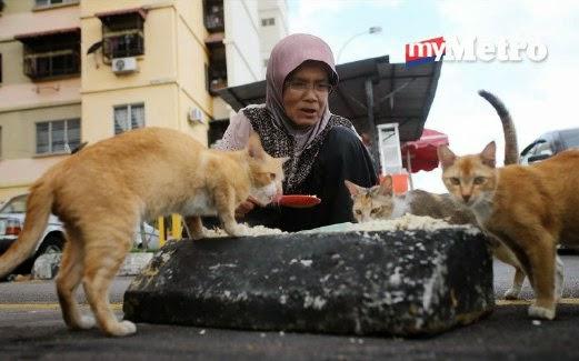 Kisah warga emas yang berjalan sejauh 5km setiap hari untuk sedekah makanan kepada 200 kucing jalanan