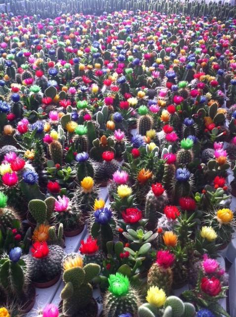 Delantales y manteles comprar flores y plantas super - Plantas de plastico baratas ...