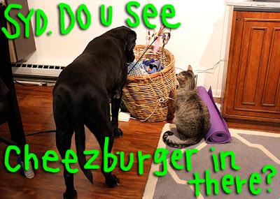 syd-kuma-burger01