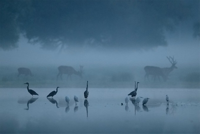 Early Dawn Photography by Sandor Bernath
